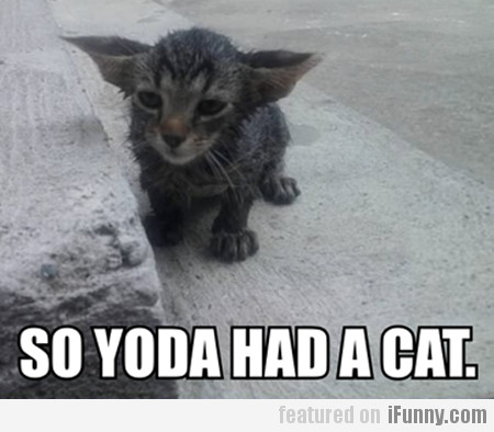 So Yoda Had A Cat