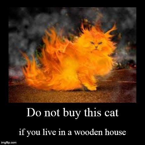 Fiery Cat