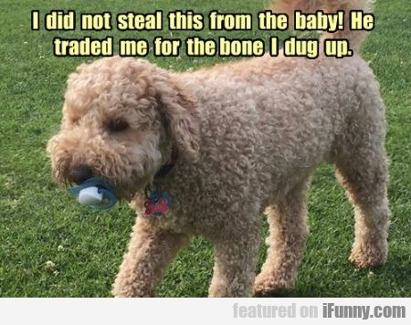 I Did Not Steal This From The Baby