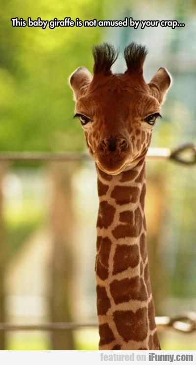 This Baby Giraffe...