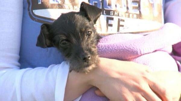 This little girl was found in an abandoned car parked in an impound lot.