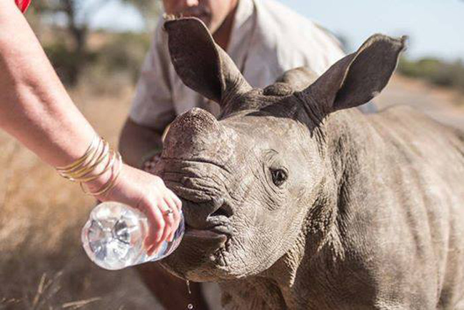 While waiting for park rangers to arrive, he gave the calf water to drink and poured some over her baked skin.