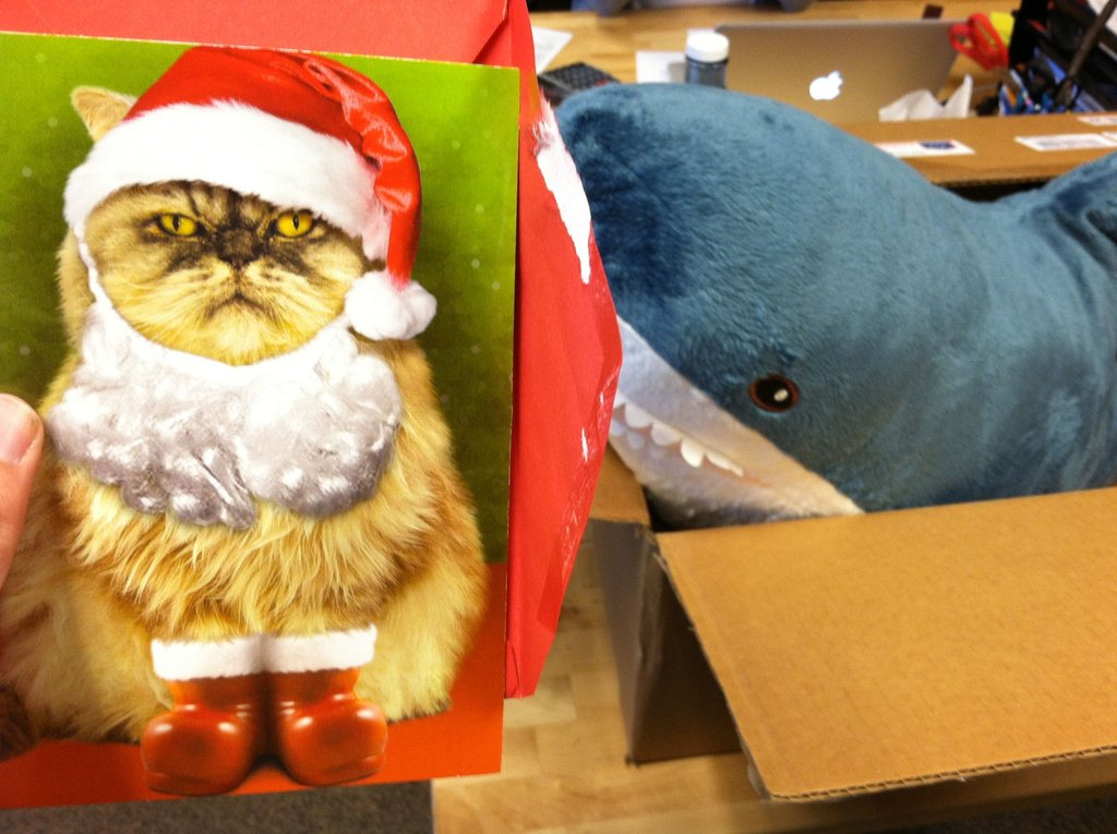 A grumpy santa paws. That shark looks hungry in the background.