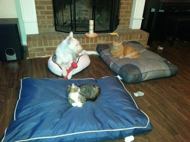 Even worse, they may be downgraded from the floor to a cat bed.