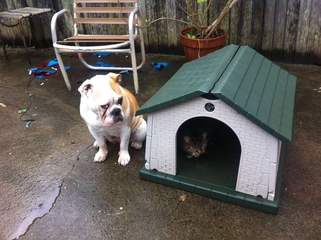 Don't let your dogs lose even their doggie houses.