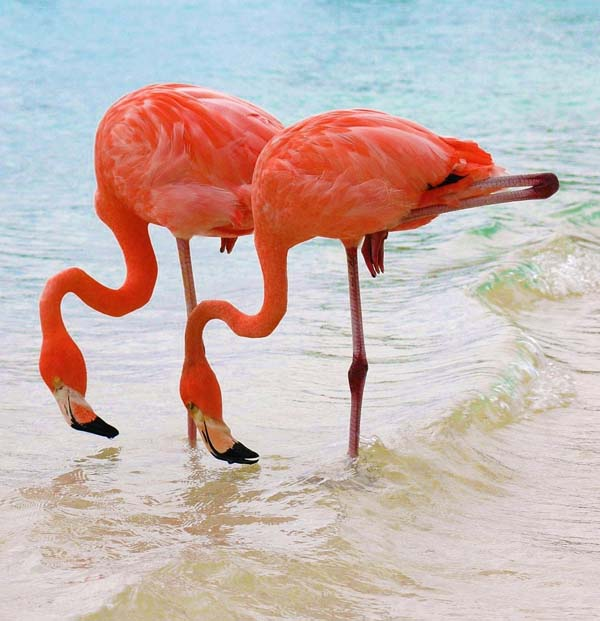 And today I learned flamingos could probably take over the world.