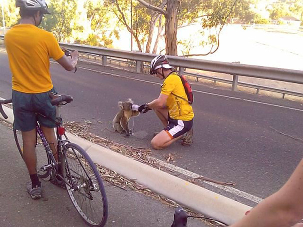4. When this cyclist sacrificed his track time to give a Koala bear something to drink.