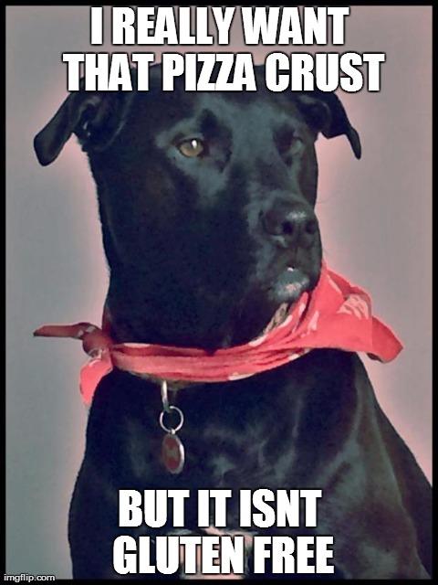 Forlorn 1st world dog