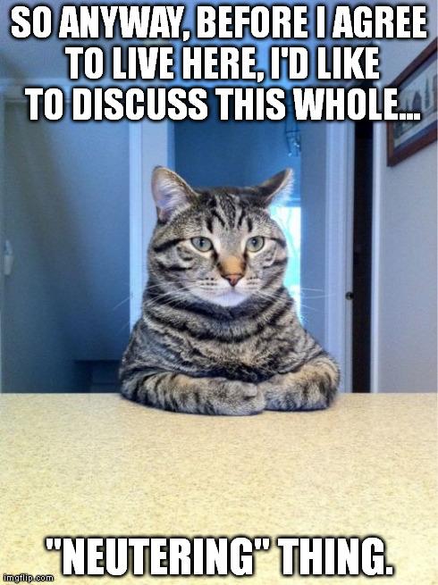 Take A Seat Cat